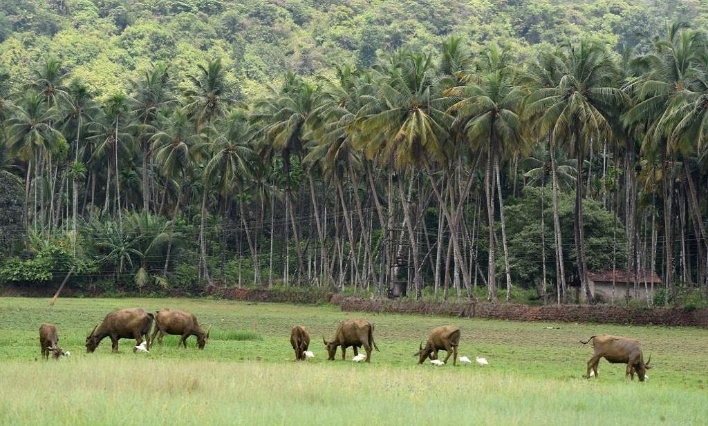 Farm Near Saptkutashwar